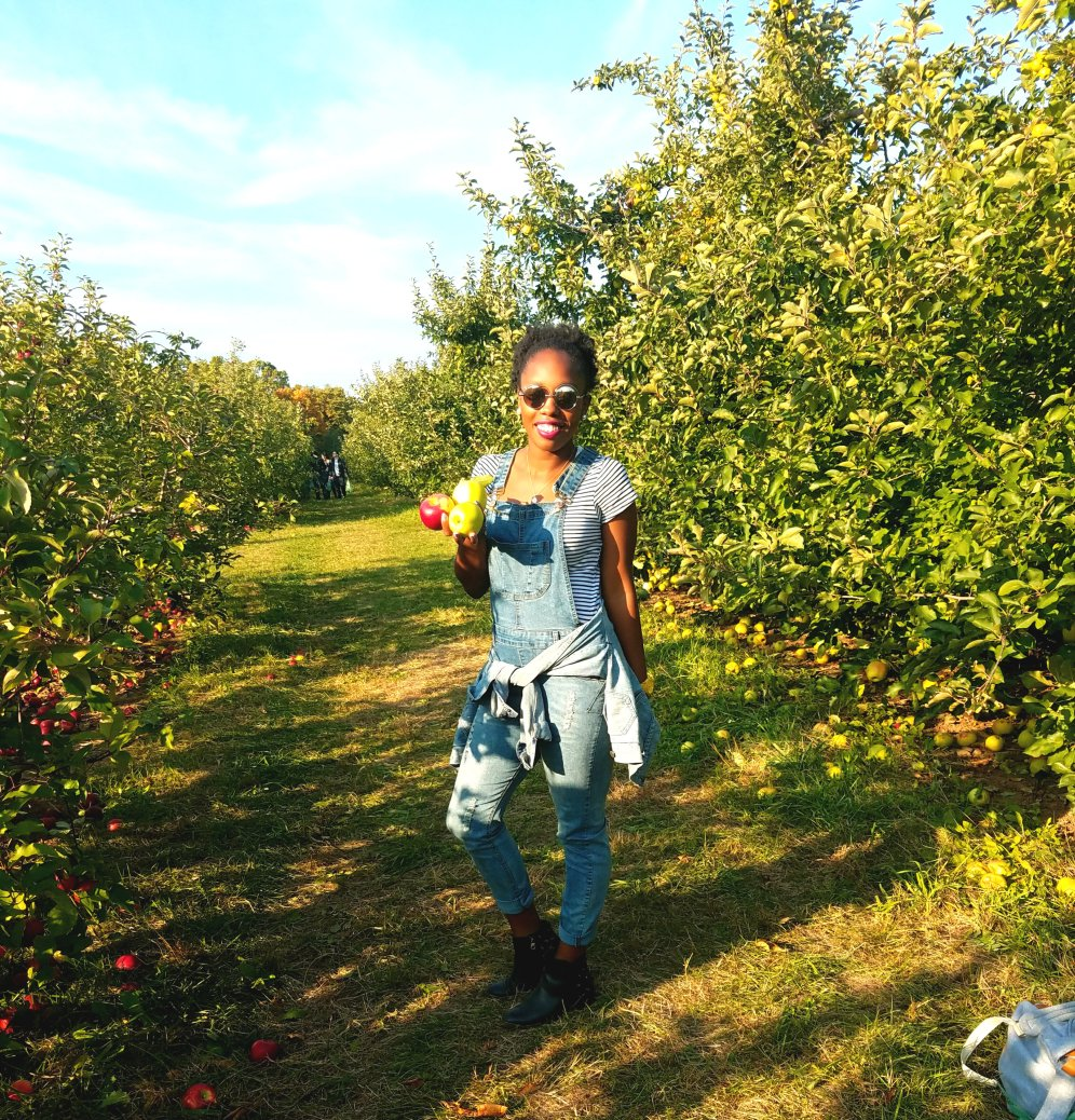orchard-picking